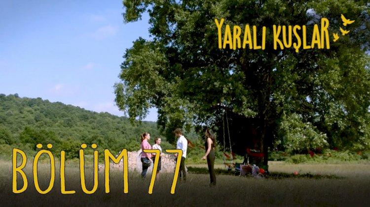 Yarali Kuslar   Ranjene ptice epizoda 77